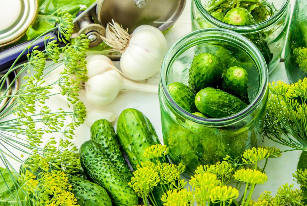 Ako pestovať uhorky a vyťažiť tak z uhorkovej sezóny maximum
