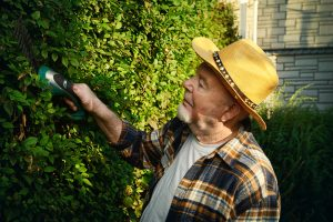 Starší muž reže živý plot