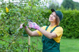 Žena strihajúca strom