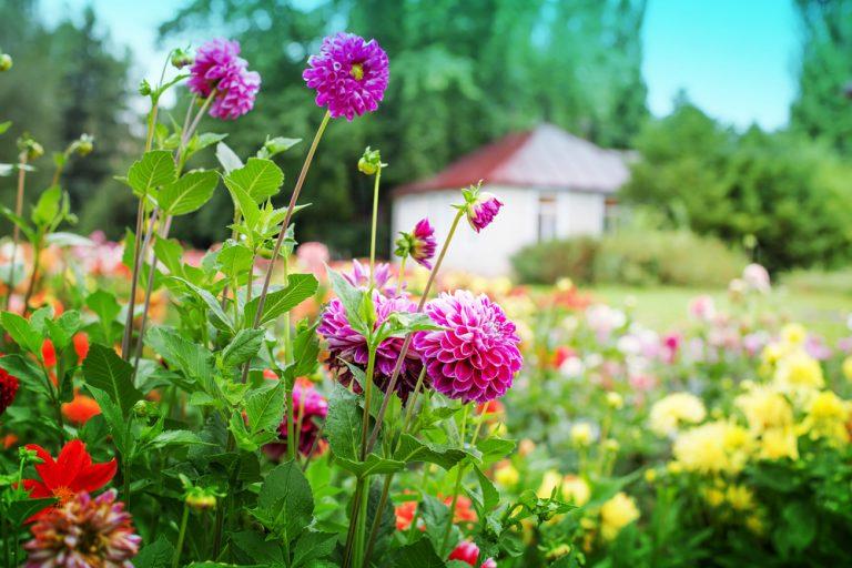 Kvety v záhrade, dom