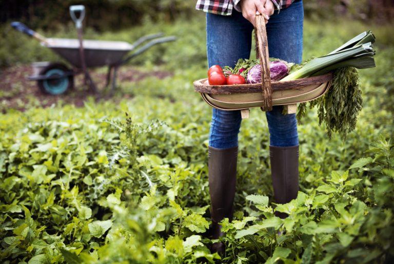 Mladá žena v záhrade s košíkom plným zeleniny