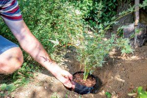 Prirovnanie veľkosti jamy a javora v kvetináči