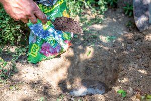 Sypanie rašeliny do jamy na výsadbu javora