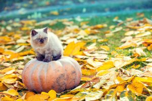 Mačka na tekvici v záhrade, opadané lístie
