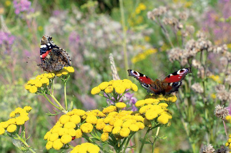 Motýle na kvetoch na lúke