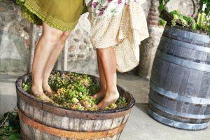Lisovanie hrozna ženskými nohami
