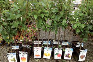 Ovocné stromčeky v kontajneroch