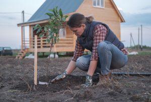 Žena sadí ovocný strom pred chatou