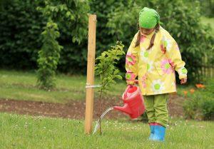 Dievčatko v žltej bundičke polieva vysadený strom