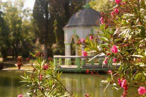 Kvitnúci oleander a jazero v pozadí