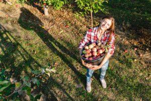 Žena s košíkom jabĺk v záhrade