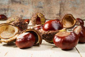 Plody pagaštanu konského