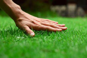 Ruka na pokosenom trávniku