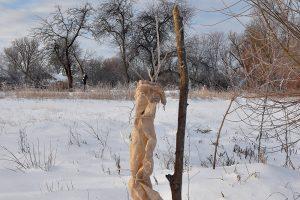 Mladý ovocný stromček obalený jutovinou počas zimy