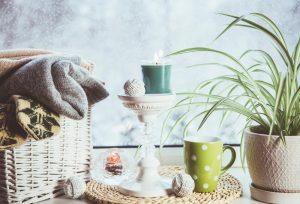 Izbové rastliny na okne, sneh