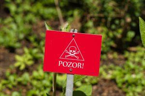 10 najtoxickejších rastlín na svete. Sedem z nich rastie aj na Slovensku!