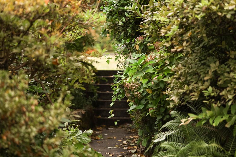 Zarastená divoká záhrada