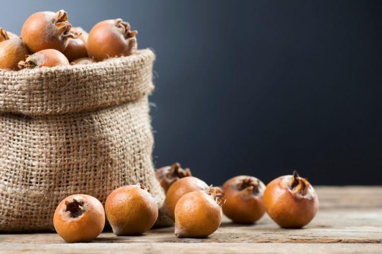 Pozbierané plody mišpule v jutovom vrecku