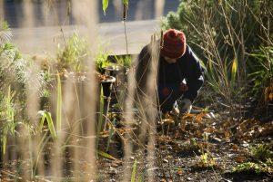 Záhradkár v decembri alebo Zoznam úloh na zimné obdobie