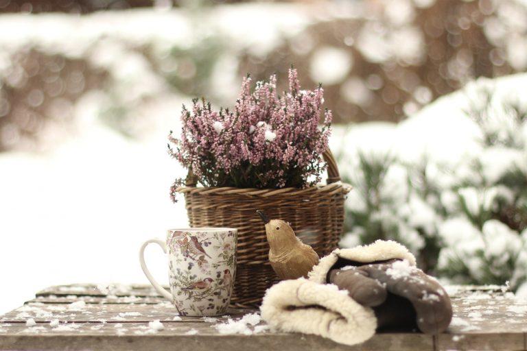 Kvetináč, rastliny, šálka na zasneženom stole v záhrade