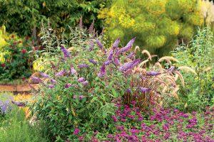 Kvitnúce kry v záhrade