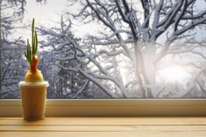 Cibuľovina na okne