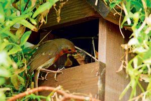 Vták kŕmiaci potomstvo v búdke