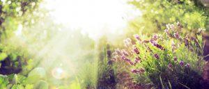Slnko medzi bylinkami