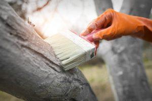 Natieranie stromov vápnom