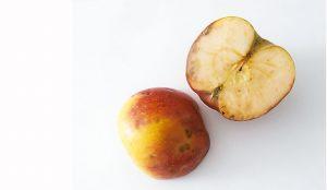 Horká pehovitosť jabĺk