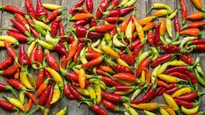 Farebné chilli papričky