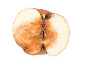 Monilióza jablka