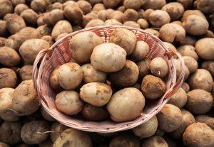 Zemiaky v košíku na kope uskladnených zemiakov