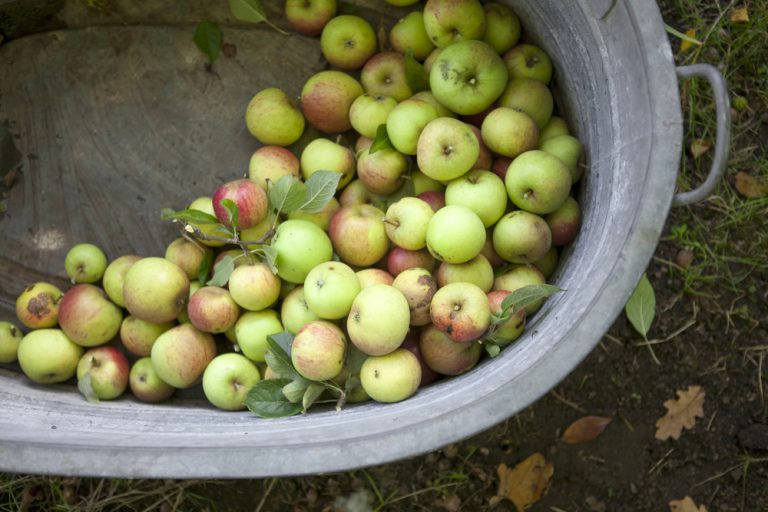 Jablká v kovovej vani