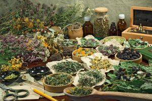 Rôzne druhy sušených liečivých byliniek