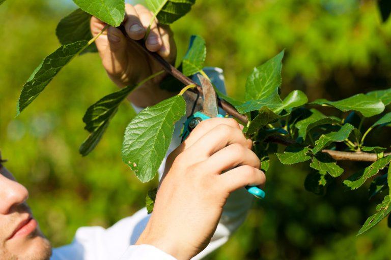 Veľký abecedný prehľad rezu drevín a rastlín: Kedy, čo a ako rezať?