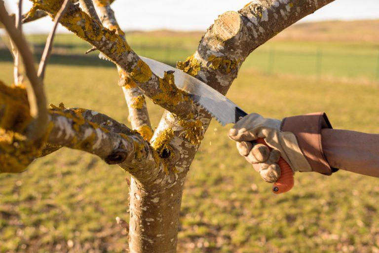 Rez stromu