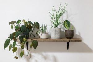 Využite záhradnú mimosezónu a venujte pozornosť izbovkám. Tieto kroky určite nevynechajte