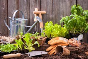 Bazalka, priesady, krhla a malé záhradné náradie