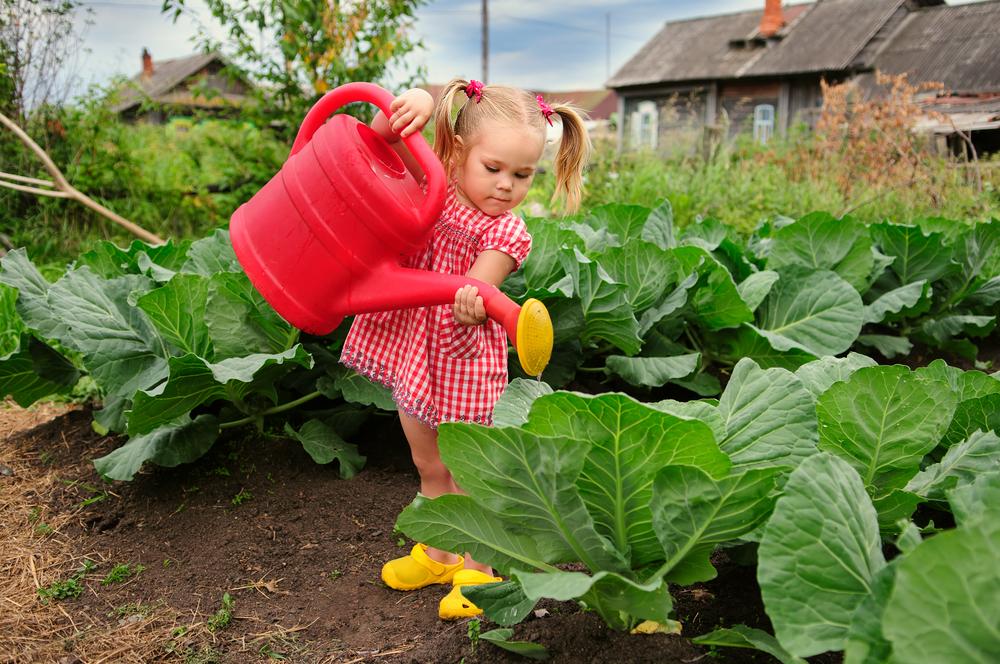 Dievčatko polieva veľkou ružovou krhlou úrodu v záhrade