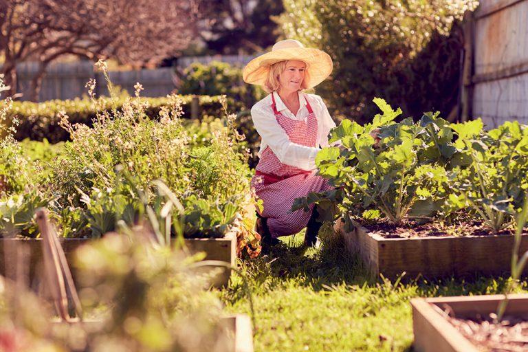 Vyvýšené záhony v záhrade, záhradkárka v klobúku