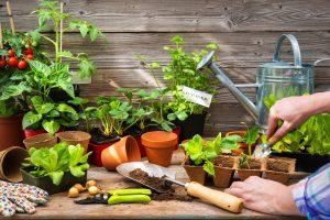 Priesady zeleniny na stole, krhla, kvetináče
