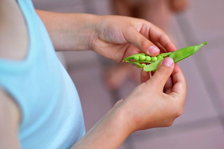 Otvorený strúčik hrachu v detských rukách