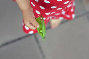 Hrášok v ruke dieťaťa