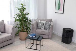 Obývačka s fikusom