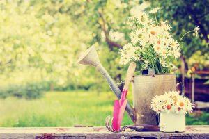 Kvety v krhle, záhrada