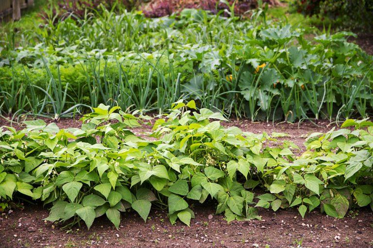 Záhon v záhrade