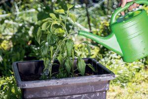 Málo miesta? Vyskúšajte zmiešané zeleninové výsadby v nádobách