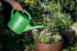 Polievanie výsadby v kvetináči
