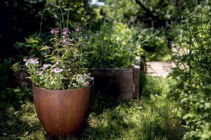 Potešte oko a dušu: Sezónna kvetinová výsadba na terasu